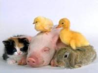 Wil jij dieren aanvoelen, begrijpen en met ze praten?