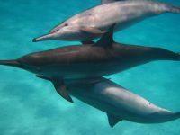 Dolfijnreis