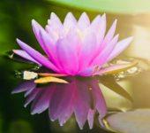 Webshop spirituele&esoterische artikelen-geschenken