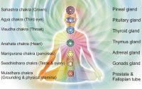 Proefclienten energetische therapie gezocht